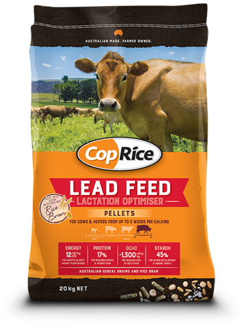 Lead Feed