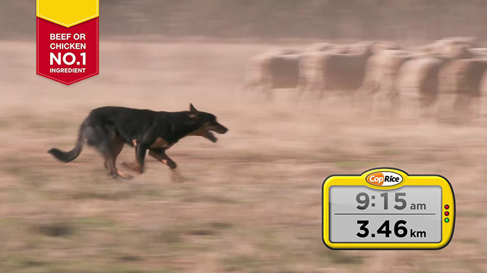 CPA18455 Coprice Working Dog 15 second TVC FINAL